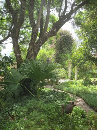 Bisibee Guest House : The beautiful garden