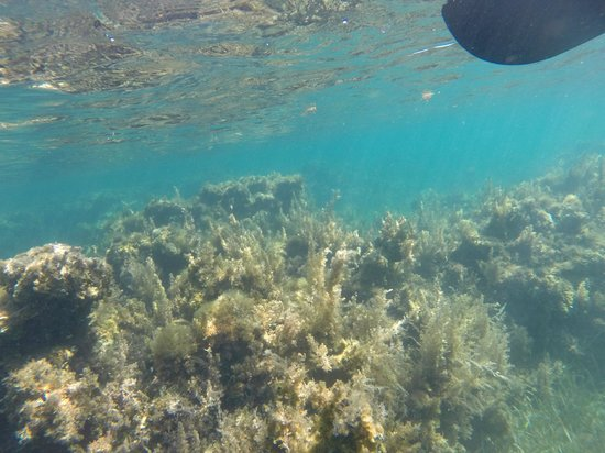 Sunscape Splash Montego Bay : Taken from canoe with GoPro camera