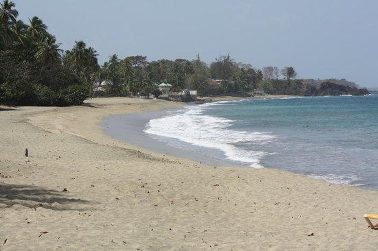 Birdie's Nest: Turtle Beach
