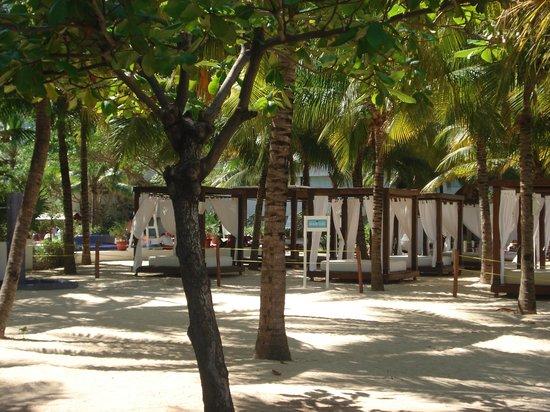 Grand Oasis Palm: Oasis Palm