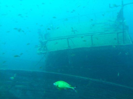 Submarine Safaris SL: Submarine Safaris