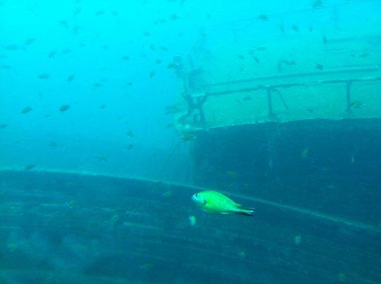 Submarine Safaris Lanzarote: Submarine Safaris