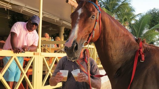 Tropical Sunset Beach Apartment Hotel: This horse swims and drinks beer!