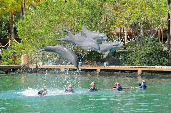 Dreams Tulum Resort & Spa : Swimming with Dolphins