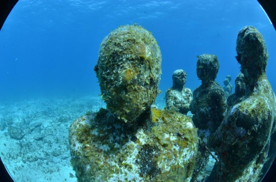 Cruise Divers: Musa