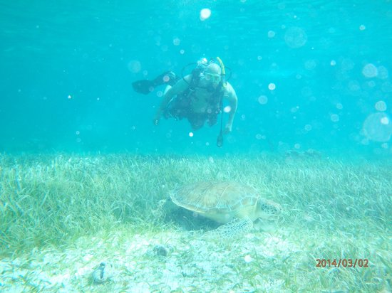 Hol Chan Marine Reserve: Several turtles in the area