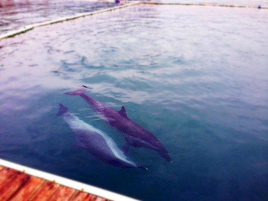 Fenjiezhou Island : 海豚