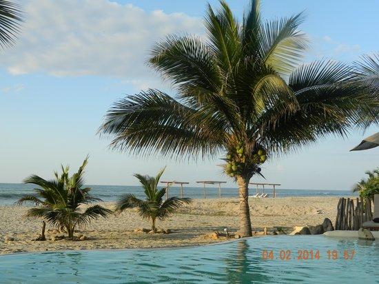 La Posada de los Tumpis: que hermosa palmera