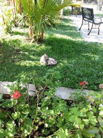 Amanvana Spa Resort, Coorg : Inside ardenthe Hotel Garden