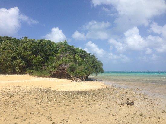 Mafana Island Beach Backpackers : Nearby Island you can walk to