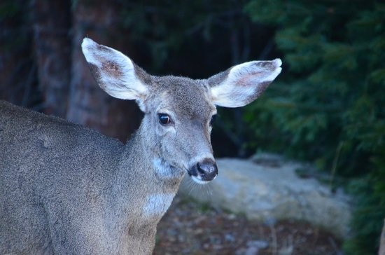 Mount Shasta Resort: A friend we met on our walk around the property
