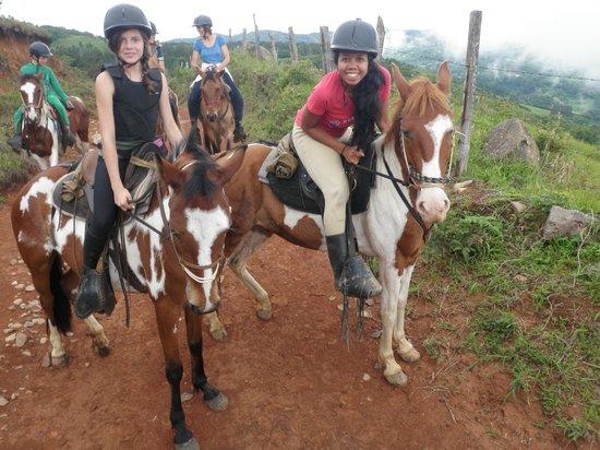 Sabine's Smiling Horses : chevaux