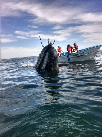 Laguna Whale Watching Tours