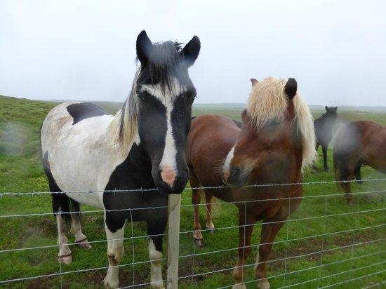 Hotel Laekur: Ponies