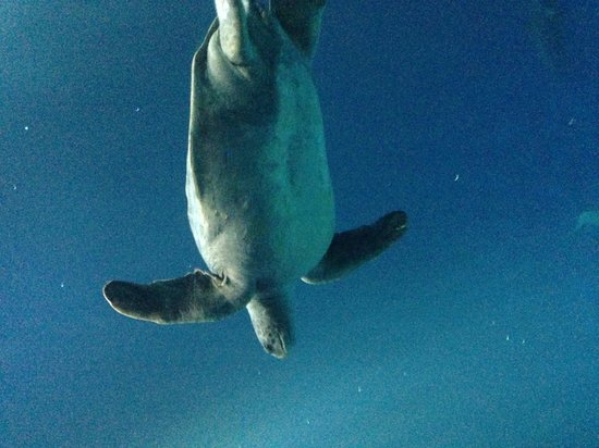 Monterey Bay Aquarium: Open sea exhibit