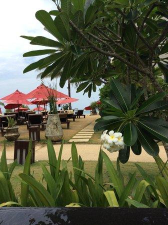 Ramada Khao Lak Resort : Udsigt fra poolen