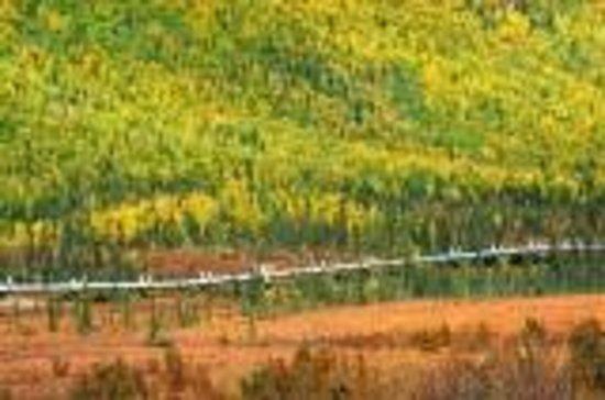 Northern Alaska Tour Company : パイプライン