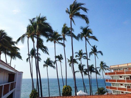 Rosita Hotel: coconut trees