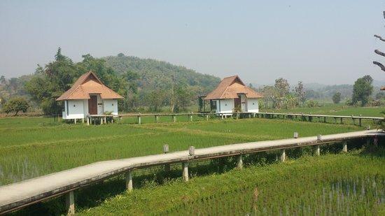 Manee Dheva Resort & Spa: ท้องทุ่งนาอันเขียวขจี @ มณีเทวารีสอร์ทแอนด์สปา ^^