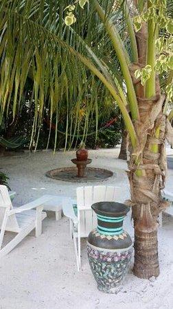 Tree Tops Guesthouse: Der süße Springbrunnen. ..
