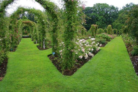 The Rose Gardens at Elizabeth Park