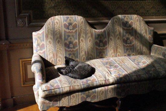 The Cat Cabinet: Кот смотрит советский мультфильм