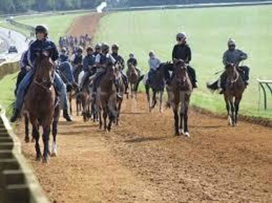 Watton, UK: Racehorses on the gallops