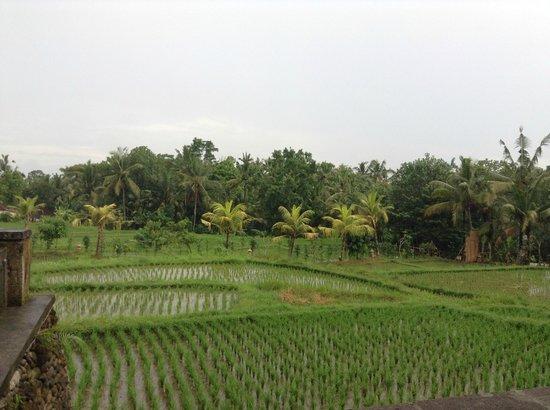 Wapa di Ume Resort and Spa : View from Villa