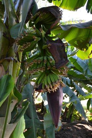 Nefertiti Hotel : Banana Island