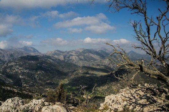Castell d Alaro: View