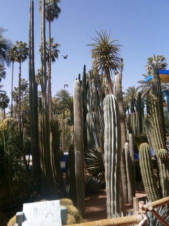 Riad Asrari: majorelle gardens