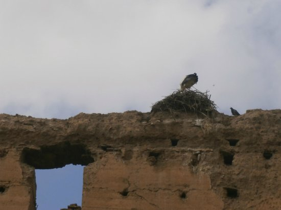 Riad Asrari: storks on the royal palace walls