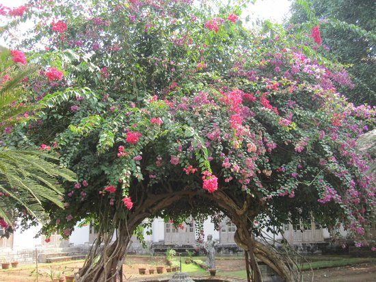 Hill Palace of Tripunithura : Tree in the gardens of the Hill Palace.