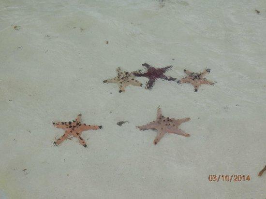 Amarela Resort: Island Hopping trip