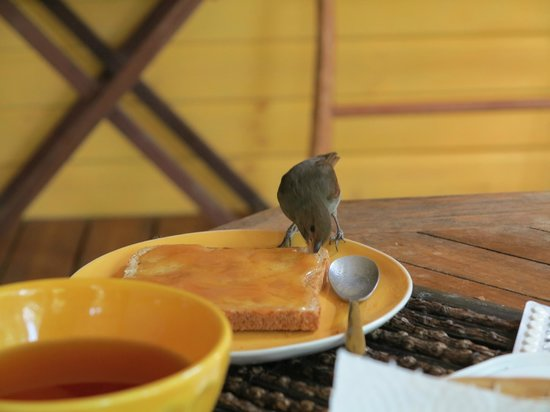 Au jardin des colibris : Adossée au JArdin Botanique, les oiseaux sont très nombreux
