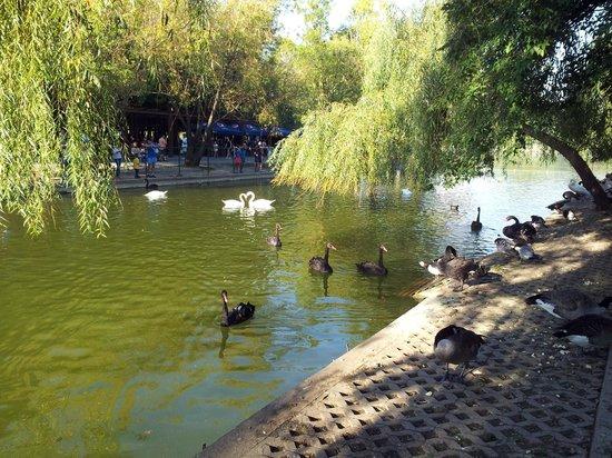 Parcul Alexandru Ioan Cuza : Alexandru Ioan Cuza Park