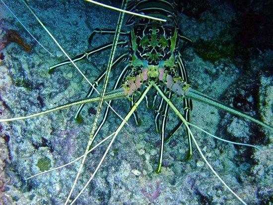 Dusit Thani Maldives: Lobster