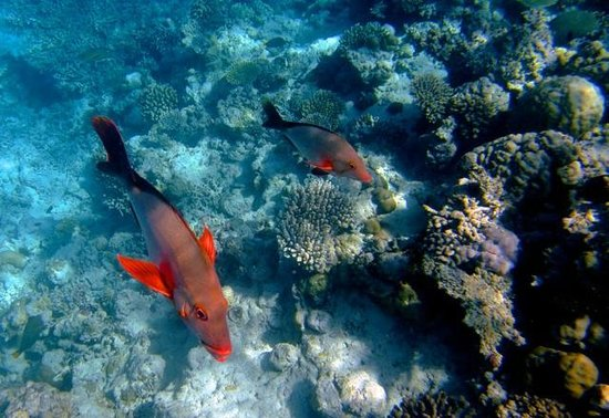 Dusit Thani Maldives: House Reef