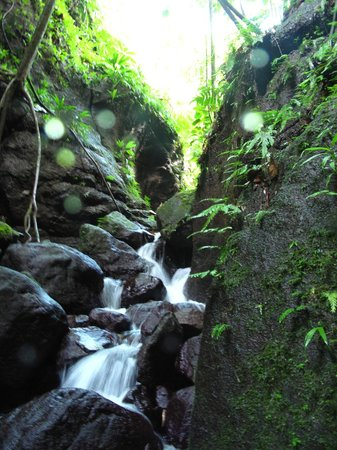 Extreme Dominica Canyoning: So pretty!