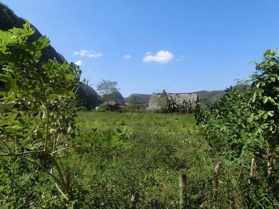 Valle de Vinales : los cimarrones