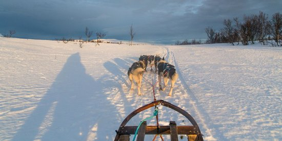 Arctic Adventure Tours - Day Tours : So much fun