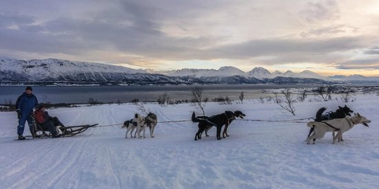 Arctic Adventure Tours: What a view!