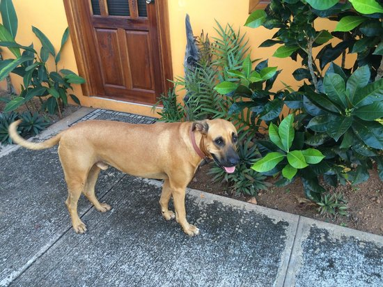 Finca Buena Vista: Balu der Wachhund