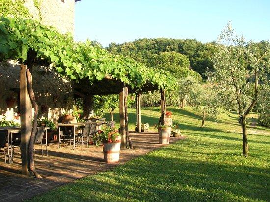 Coltivare vite pergola terminali antivento per stufe a pellet - Coltivare uva da tavola in vaso ...