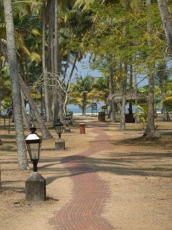 Marari Beach Resort : View towards the beach