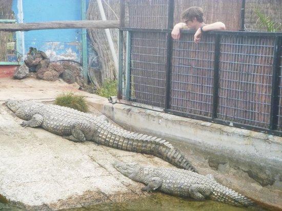 Cocodrilo Park Gran Canaria : Croc Enclosure
