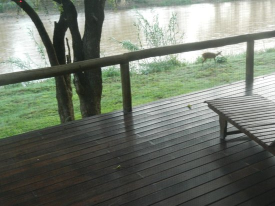Naledi Game Lodges: place to spot hippos