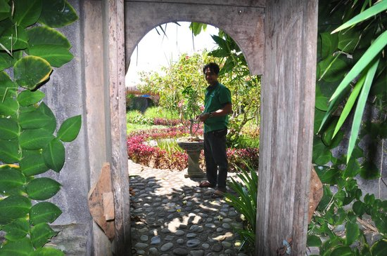 Turtle Bay Hideaway: Staff Attending the Organic Garden