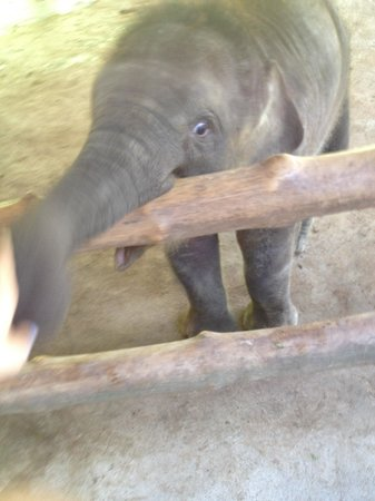 Bali Safari & Marine Park : Baby elephant playing with my hand