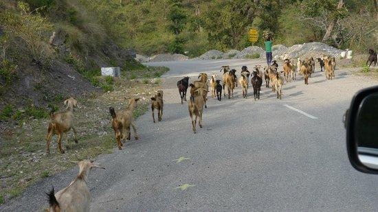 Ananda in the Himalayas: Zufahrt zum Ananda über Bergstraßen